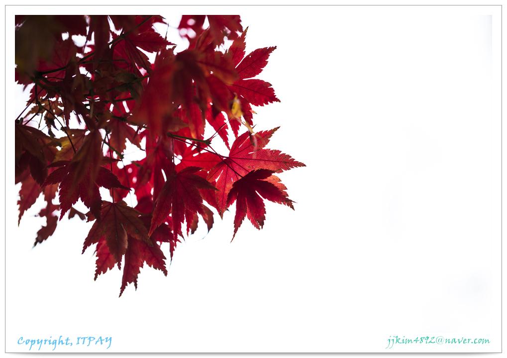 _JJ_97811113.jpg